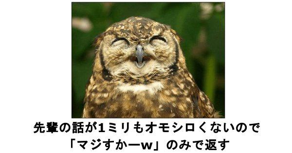 笑いで福をお届けします!表情豊かなフクロウ&ミミズクのボケて 10選