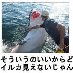 どれもおジョーズ!めっちゃ怖いのにかわいく見えるサメのボケて 11選