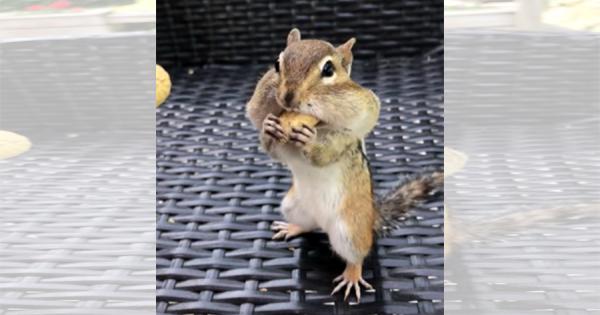 どんだけ詰め込むの!(笑) 頬にピーナッツをパンパンに詰め込むリスさんがカワイイ!
