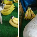 猫の手を借りたお店がこちら!通いつめたくなる看板猫のいる光景 10選