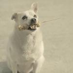 串焼きのお礼に犬が恩返し!片思いの美女に想いを届ける……。タイの心温まるCMが世界中で話題
