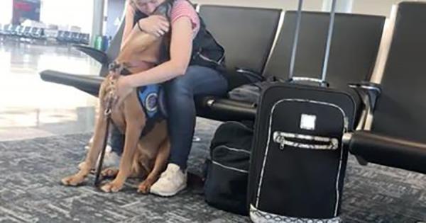 空港の搭乗ロビーで、ご主人のパニック障害の発作を敏感に察知し、身体を寄せるワンコ