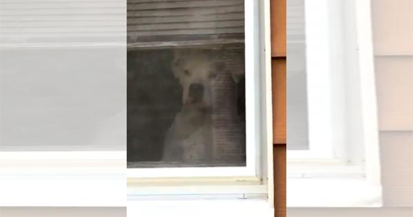 愛情が強すぎる!(笑) 家を出たご主人を、窓から窓を巡りずっと監視するワンコが話題