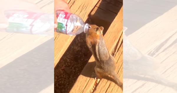 「その水、分けて!」喉が渇いたリスが観光客からペットボトルの水をもらいゴクゴク飲む