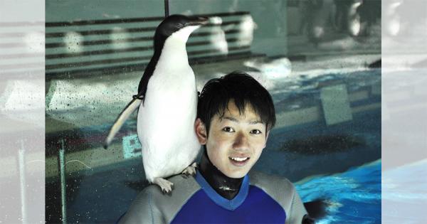 水族館の水槽の掃除をしていると、肩に勝手に乗ってくるペンギンがめちゃ可愛い!