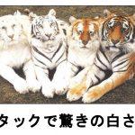 笑いのトラブル発生中!?うなるほど面白い「虎」の爆笑ボケて 10選