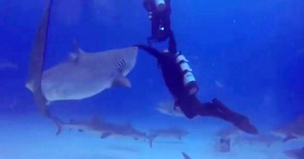 ダイバーが背後からサメに襲われる直前、相棒がサメの鼻を手で抑えて避けるファインプレー