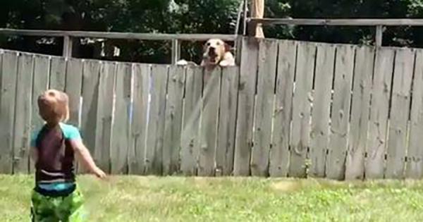 塀は友情の壁にはならない!2歳の男の子とワンコがフェンス越しにキャッチボールする動画が話題