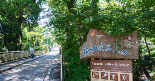 【大都会の大自然】東京都の名勝「等々力渓谷」周辺徹底ガイド