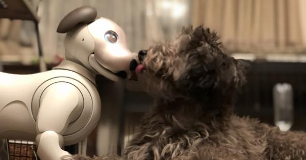 aiboと犬は友達になれる? 2週間の共同生活で、犬がaiboを「生き物」として認識