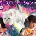 やっぱりみんな猫が好き! 猫好きスタッフが猫のスーパースローモーション撮影に挑戦