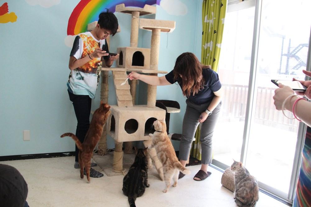 12猫集まる_R