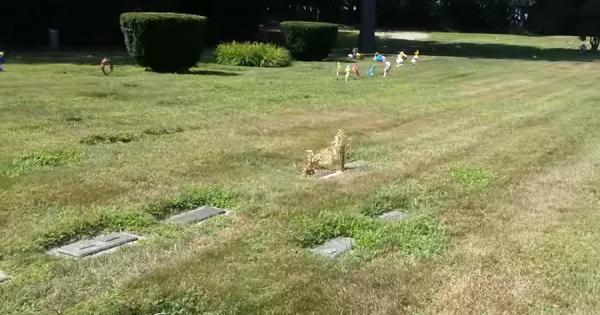 ペットのお墓の上に亡くなった犬らしき姿が現れた!供えた花が犬の形に見えた奇跡に感動