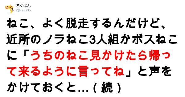 「日本語なんか簡単だニャ」人間とネコは会話が成立するとわかる話 7選