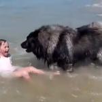 海で遊んでいる女の子が溺れていると勘違いしたワンコ、洋服を引っ張って浜辺に引き上げる
