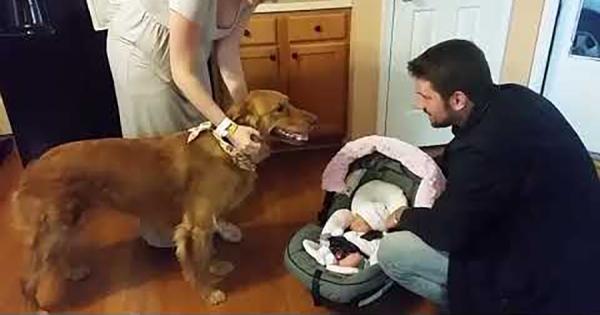 赤ちゃんの誕生を心待ちにしていたワンコが、ついに初対面!その反応が微笑ましい