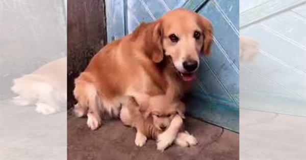 過保護なお父さんワンコ、子犬を他の人に指一本触らせないように鉄壁ブロック!