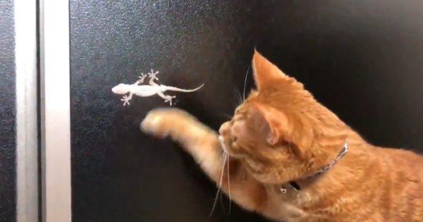 ネコパンチ炸裂!ヤモリに翻弄されるネコちゃんがかわいすぎ