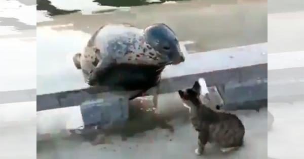 「そ、そんな…」猫パンチでノックアウトされるアザラシのリアクションがめちゃ可愛い!