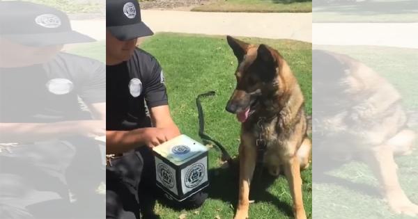 初めて人形が飛び出すビックリ箱を見た警察犬!意外なリアクションに思わず吹き出す