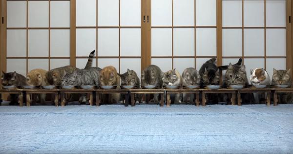 横一列で食事をする13匹のニャンコ!物音にビックリして一気に逃げ出す(笑)