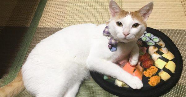 リアルなお寿司クッションに大興奮!夢中でじゃれつくネコがかわいい