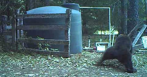 男性なら間違いなく同情する(笑) 遊んでいたクマさんのアソコにホースが直撃し悶絶!