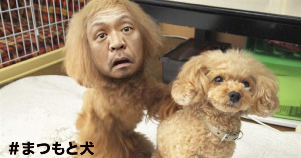 松本人志が、この秋またなんかやるらしい!謎の「まつもと犬」登場で期待が高まる新番組とは