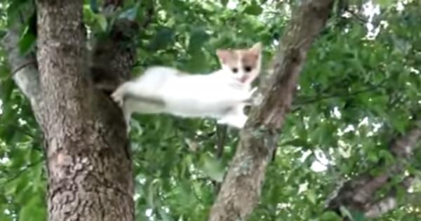 高い木から降りられなくなった子猫!母ニャンコの情熱が子猫を奮い立たせ、恐怖を克服