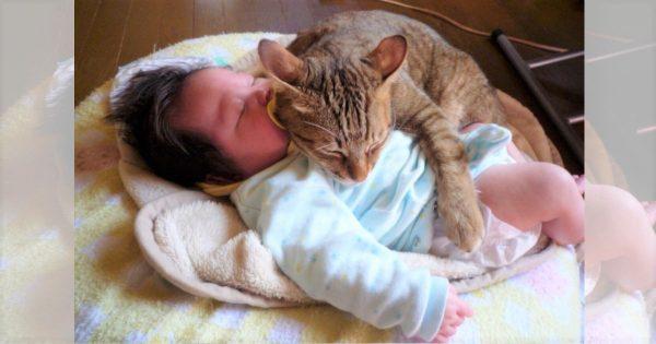 「あれから10年」ネコと赤ちゃんの仲良しコンビの変わらない関係にほっこり