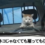 吹いたら負け!電車で読んだら危険なネコの爆笑ボケて10選