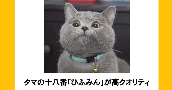 憂鬱な月曜日を吹っ飛ばしたい!あなたをきっと笑顔にするネコのボケて10選