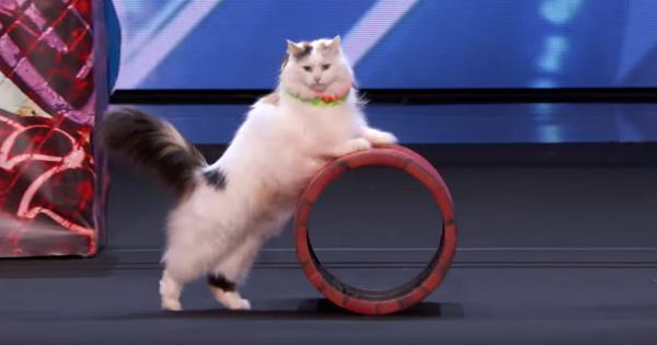 ニャンてことだ!スゴ技を連発する猫のサーカスに、米国オーディション番組の辛口審査員もタジタジ