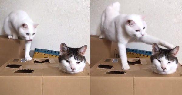 猫が考えた謎の遊び「猫たたき」の空気感がひたすら可愛い