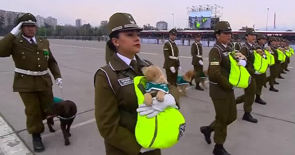 警察犬のたまごが可愛すぎる!チリ軍事パレードのワンワン大行進にメロメロ