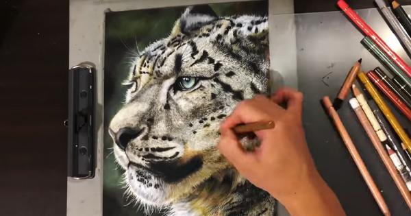 高校2年生男子が色鉛筆で描いたユキヒョウが、写真のような美しさ!スゴすぎると話題に