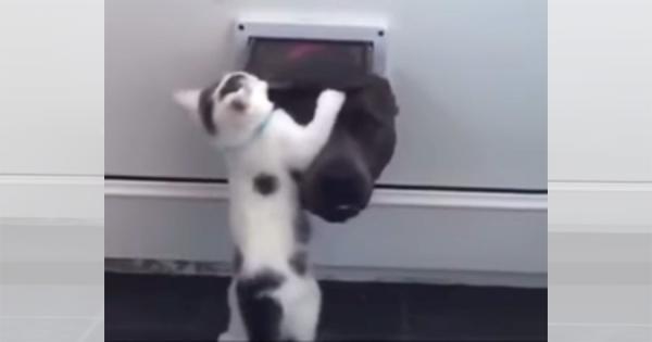 「ここは通さないニャ」ペットドアから顔を出すワンコを断固拒否する子猫!熾烈な戦いにほっこり