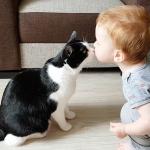 相思相愛♡大好きなネコとキスするたびに大はしゃぎする赤ちゃん!見ているだけで癒やされる