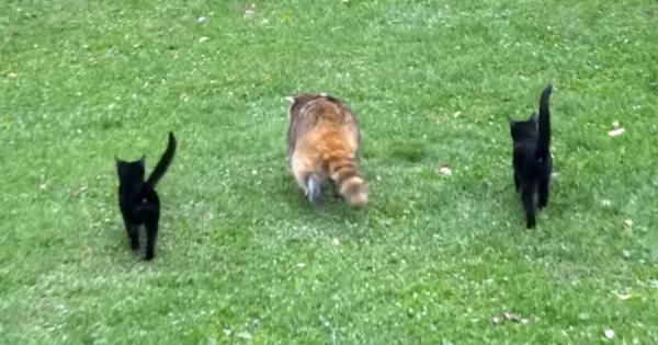 盲目のアライグマを支える2匹の黒猫!種族を超えた愛情が起こした奇跡に心打たれる