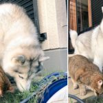 「仲良く草食っててめちゃくちゃ和んだ」犬猫コンビのゆる~い空気感がマジ最高