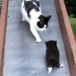 すべり台から落ちてしまった子猫を必死に助ける親猫!まさかのハプニングに爆笑必至
