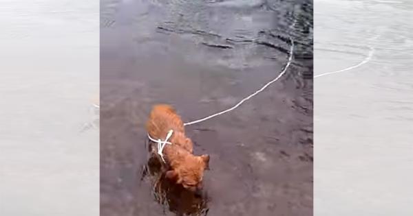 サイクリング中、川の中で岩に繋がれている子犬を救助!無事保護され、温かい家庭に迎えられる