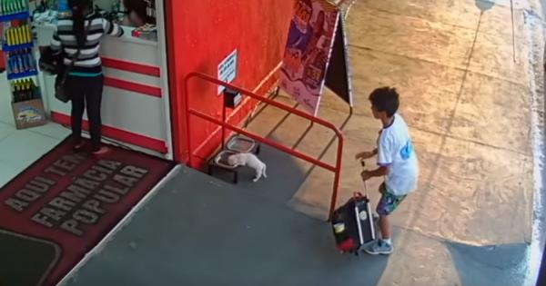 貧しい少年が捨て犬を発見。ご飯を食べさせてあげるため、犬をバッグに入れエサ置き場に運ぶ