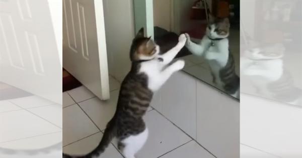 目指せチャンピオン!鏡の前でシャドーボクシングに励むニャンコがめちゃ可愛い
