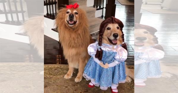 犬だってハロウィンを楽しみたい!「オズの魔法使い」のコスプレをしたワンコがめちゃ可愛い