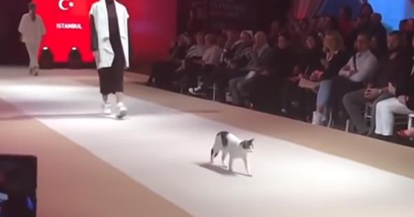 これが本当のキャットウォーク!ファッションショーに乱入した猫、観客の視線を独占