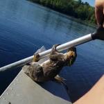 湖の真ん中で溺れていたリス!釣りをしていた男性のオールに掴まり無事救助