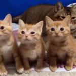 そっくりな3匹の子猫が集合!シンクロして首をフリフリする様子が可愛すぎる♡