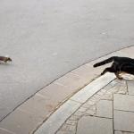まるでトムとジェリー!ネズミを狩ろうとしたネコ、逆にネズミに追い回される