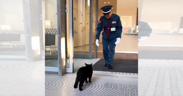 美術館に入りたくてたまらない黒猫!警備員に止められると、可愛すぎる行動に出る